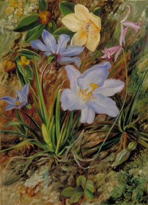 Марианна Норт. Бразильские дикие цветы