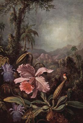 Мартин Джонсон Хед. Цветки орхидеи и пассифлоры и колибри