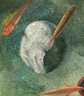 Vladislav Zhidenko. Fish