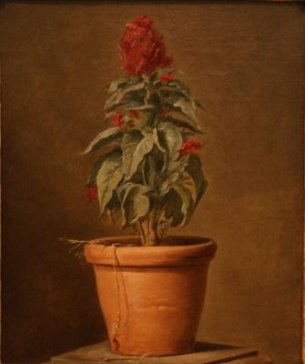 Henri-Horace Roland Delaporte. Potted plant