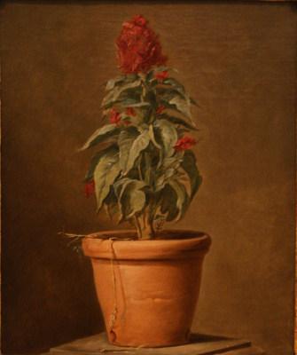 Henri-Oras Roland Delaporte. Potted plant