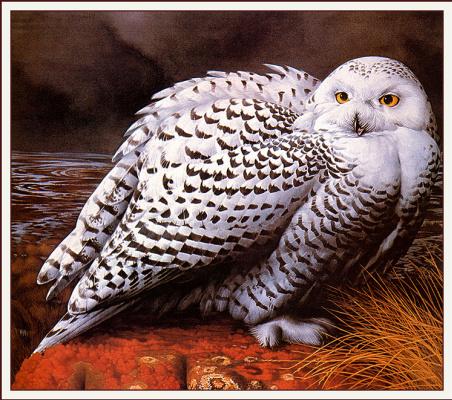 Барри Дрисколл. Белая сова
