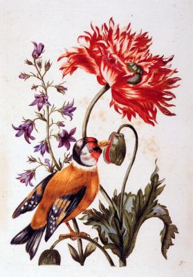 Николя Роберт. Цветы с птицей