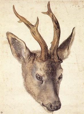 Альбрехт Дюрер. Голова оленя