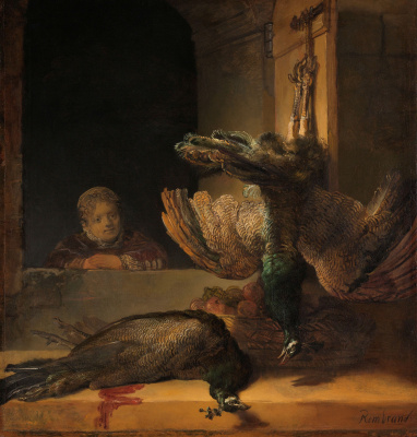 Still life with two dead peacocks