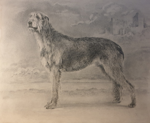 Irina Kryuchkov. Portrait of an Irish Wolfhound