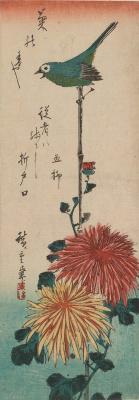 Утагава Хиросигэ. Японская белоглазка и хризантема