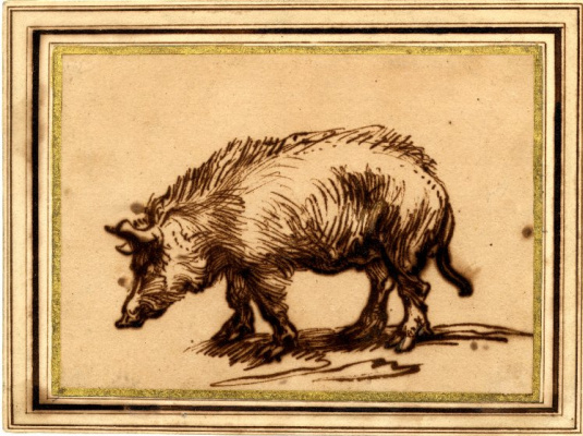 Рембрандт Харменс ван Рейн. Набросок свиньи
