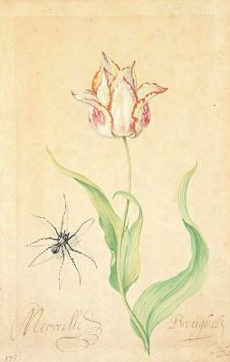 Baltazar van der Ast. Tulip and spider