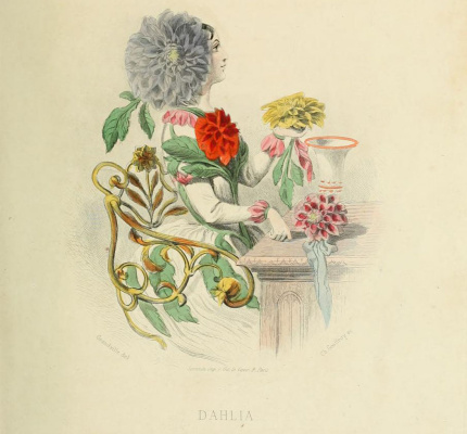 "Jean Inias Isidore (Gerard) Granville. Dahlia. The series ""Animate Flowers"""