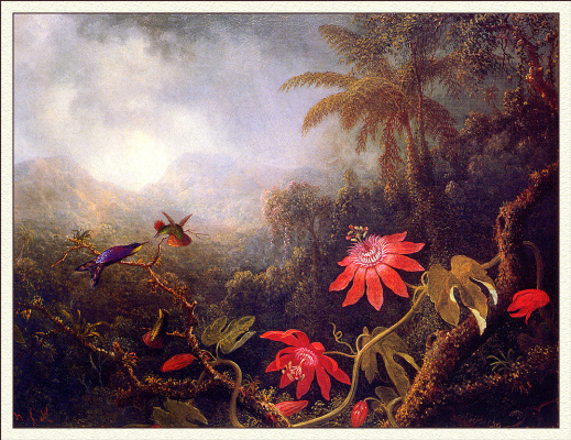 Мартин Джонсон Хед. Страстоцветы и три колибри