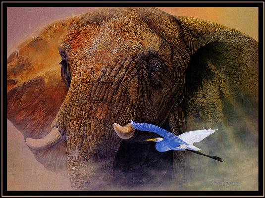 Джон Грэм Стивенсон. Слон