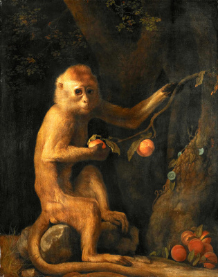 George Stubbs. Green monkey