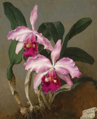 Лев Смарагдович Чистовский. Орхидеи. мазонит