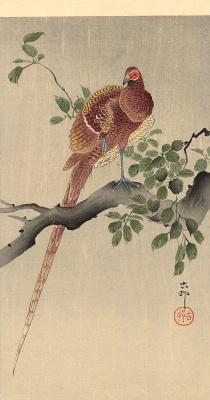 Охара Косон. Птицы 77