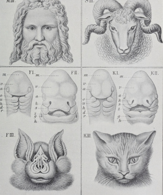"""Ernst Heinrich Haeckel. Species changes. """"Anthropology and the history of human development"""""""