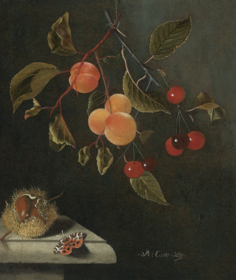 Still life with a butterfly, apricots, cherries and chestnut