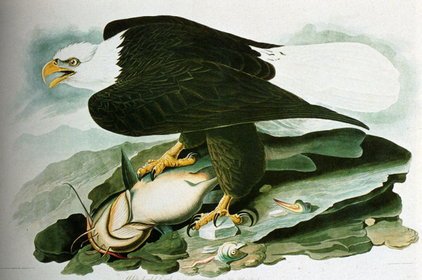 John James Audubon. The leader