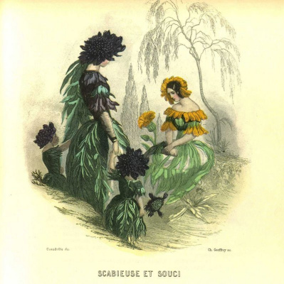 "Jean Inias Isidore (Gerard) Granville. Scabiosis and Calendula. The series ""Animate Flowers"""