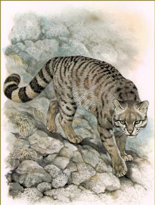 Роберт Даллет. Леопард колоколо