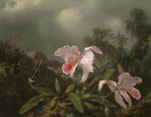 Martin Johnson Head. Orchids and hummingbirds against the background of the jungle