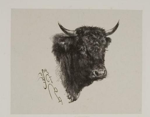Rose Bonhur. The bull's head