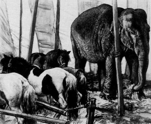 Лора Найт. Слон