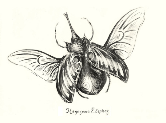 Platon Nikolayevich Starodubov. Elephant Beetle
