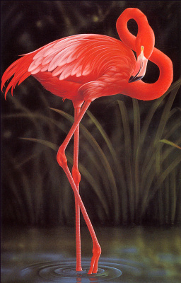 Роберт Гисти. Фламинго