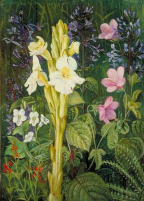 Марианна Норт. Цветочный ковер