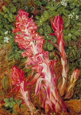 Марианна Норт. Калифорнийские цветы