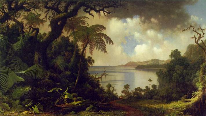 Martin Johnson Head. View of the Fern Three Walk, Jamaica