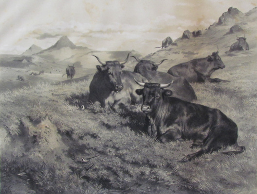 Rose Bonhur. A herd of cows in the mountains of Auvergne