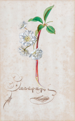 Балтазар ван дер Аст. Цветущая ветка
