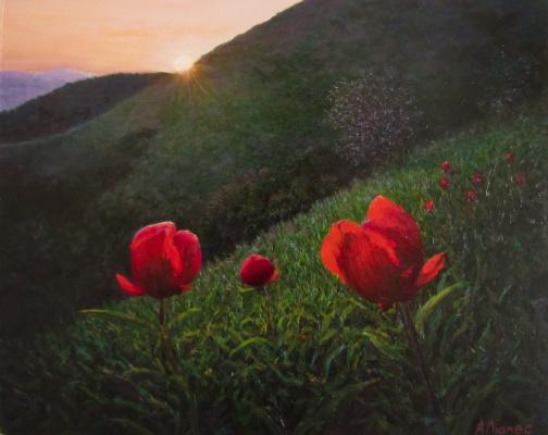 Andrew Lumez. Red flowers