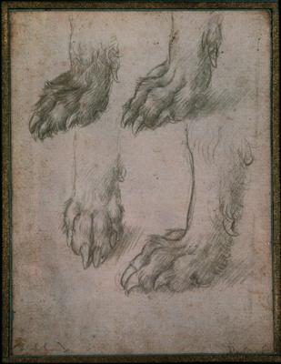 Leonardo da Vinci. Sketches paws dog and wolf