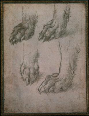 Leonardo da Vinci. Sketches paws dog and wolf