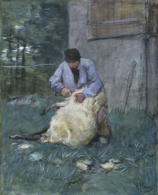 Антон Мауве. Стрижка овцы