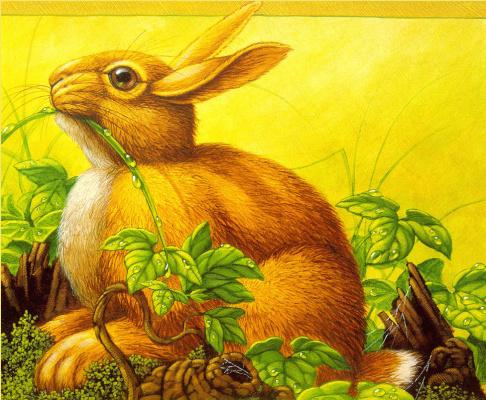 Кристофер Каньон. Кролик в траве