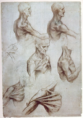 Leonardo da Vinci. Anatomical sketches of the neck and shoulders