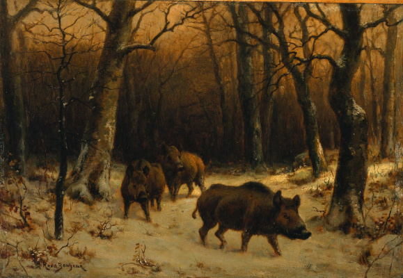 Rose Bonhur. Wild boars in the snow