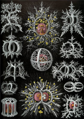 """Ernst Heinrich Haeckel. Stefodii. """"The beauty of form in nature"""""""