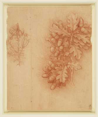 Leonardo da Vinci. Oak and dyer's greenweed
