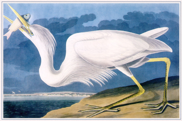 John James Audubon. Mining