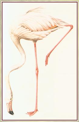 Питер Барретт. Фламинго