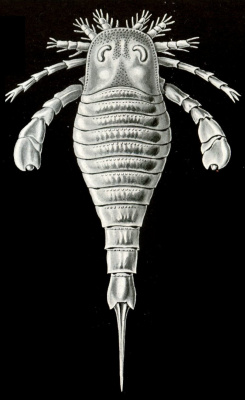 "Ernst Heinrich Haeckel. Euriptheid or Sea Scorpion. ""The beauty of form in nature"""