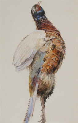 John Ruskin. Dead pheasant