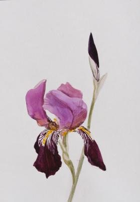 Ekaterina Sergeevna Yurashevich. Iris