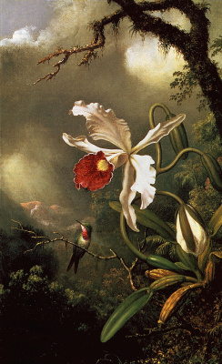 Martin Johnson Head. Hummingbirds and White Orchid
