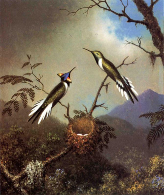 Martin Johnson Head. Sunny angel: a pair of hummingbirds at the nest